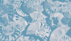 Abstrakt grynig bakgrund av fossil- ammonit, dekorativ tapet av förstenade skal, tryck från spiral av royaltyfri bild