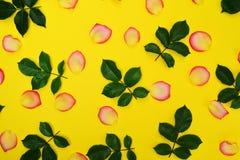 Abstrakt gul bakgrund med gula kronblad Royaltyfri Bild