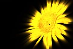 Abstrakt gul blomma Royaltyfria Foton