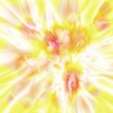 Abstrakt gul textur av blommor Royaltyfri Bild