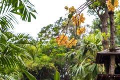 Abstrakt gul tropisk blommabakgrund Härliga tropiska blommor på en grön suddig bakgrund bali indonesia Arkivbild