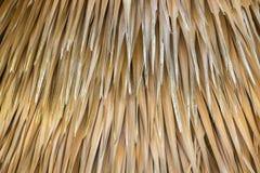 Abstrakt guling som är torr av trädpalmbladtextur och Royaltyfri Bild
