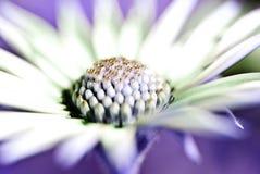 abstrakt härlig blomma Royaltyfria Foton