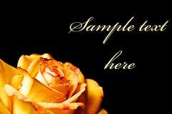 abstrakt härlig roseyellow Royaltyfria Foton