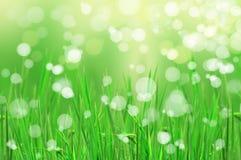 abstrakt härligt nytt gräs Arkivfoto