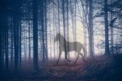Abstrakt häst för mystiker i skogen Royaltyfri Foto