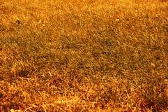 abstrakt höst bränt gräs Arkivfoto