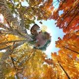 abstrakt höstfall oktober Fotografering för Bildbyråer