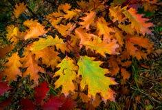 Abstrakt höstfrunch Royaltyfri Fotografi