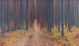 Abstrakt höstlandskap i prydlig skog Royaltyfri Bild
