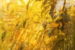 Abstrakt höstlig horizotal bakgrund smutsigt fönster och gräsplan p Arkivfoton