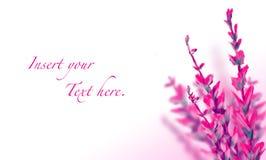 Abstrakt illustration för blommamallkort Royaltyfri Bild