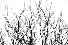 Abstrakt isolat som är svartvit av torkat träd Fotografering för Bildbyråer