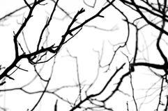 Abstrakt isolat som är svartvit av torkat träd Royaltyfri Foto