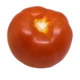 abstrakt isolerad röd tomatwhite för bakgrund illustration Royaltyfri Foto