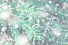 Abstrakt julkort med Xmas-trädfilialer och snöflingor Royaltyfri Fotografi