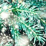 Abstrakt julkort med Xmas-trädfilialer och snöflingor Arkivbilder