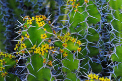 abstrakt kaktusblomma Arkivfoton