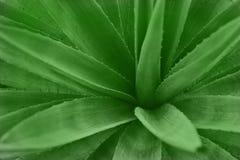 abstrakt kaktusväxt Arkivbild
