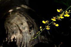 Abstrakt konst för orkidéblommabakgrund Arkivfoto