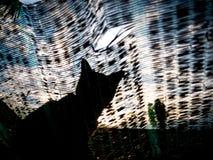 Abstrakt kota obsiadanie na podcieniowanie sieci zdjęcia stock