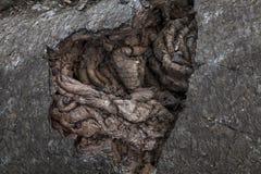 Abstrakt krabb bakgrund av lavan Arkivfoton