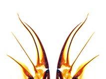 abstrakt krypvingar Royaltyfri Bild