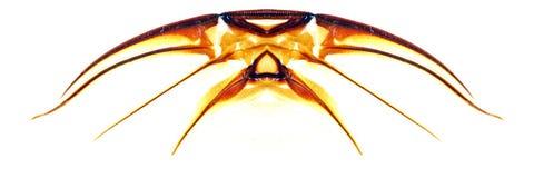 abstrakt krypvingar Arkivbilder