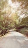 Abstrakt kurvasfaltväg med trädet som är sideway i skog Royaltyfria Foton