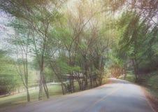 Abstrakt kurvasfaltväg med trädet som är sideway i skog Royaltyfria Bilder