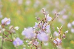 Abstrakt lös blomma för suddig och mjuk fokus Royaltyfria Foton