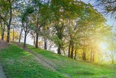 Abstrakt lövverkbakgrund, härlig trädfilial i höstlig skog Arkivfoto