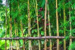 Abstrakt landskap för skoggräsplan Royaltyfria Foton