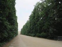 Abstrakt lantlig landsväg i skog, banan in i avstånd Arkivbilder