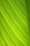 abstrakt leaf Royaltyfri Foto