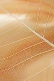 abstrakt leaf fotografering för bildbyråer