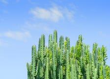 Abstrakt leafs zakończenie Zdjęcie Royalty Free