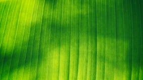 Abstrakt linje av bananbladet Royaltyfri Foto