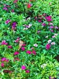 Abstrakt målning av flerfärgade blommor - bakgrundsbild fotografering för bildbyråer