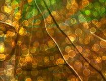 Abstrakt mångfärgad bakgrund Arkivfoto