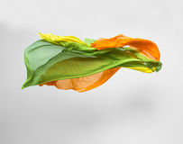 Abstrakt mångfärgat tyg vinkar in Royaltyfri Bild