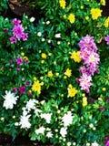 Abstrakt m?lning av flerf?rgade blommor - bakgrundsbild arkivbild