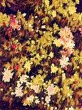 Abstrakt m?lning av flerf?rgade blommor - bakgrundsbild royaltyfri foto