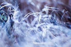 Abstrakt makro av päls i blåa signaler Royaltyfri Foto