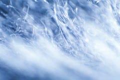 Abstrakt makro av päls i blåa signaler Royaltyfria Bilder
