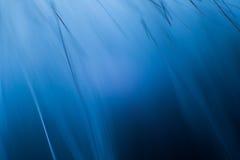 Abstrakt makro av päls i blåa signaler Arkivbild