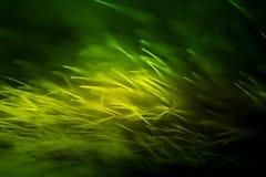 Abstrakt makro av päls i gröna signaler Arkivbild