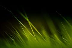 Abstrakt makro av päls i gröna signaler Royaltyfri Foto