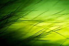 Abstrakt makro av päls i gröna signaler Arkivbilder