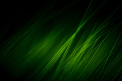 Abstrakt makro av päls i gröna signaler Royaltyfri Fotografi